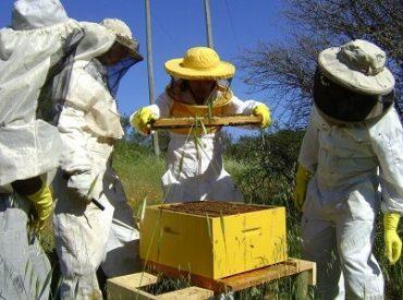 Diputado Berger alertó que proyecto que regula actividad apícola es un atentado por su rigidez