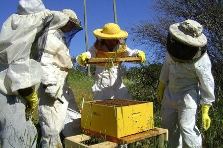 Se abre el mercado de Arabia Saudita para la miel y productos apícolas chilenos