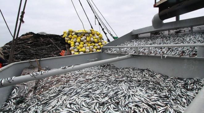 Diputado Flores presenta proyecto para que facultad fiscalizadora de desembarques pesqueros regrese a Sernapesca
