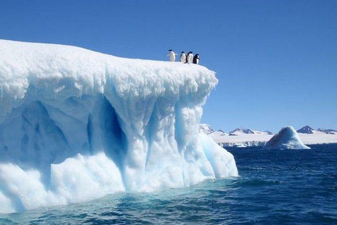 """Última semana de EXPO """"Antártica: Maravilla de Biodiversidad"""" en el Centro Cultural El Austral"""