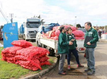 SAG retuvo más de dos toneladas de papa en Valdivia