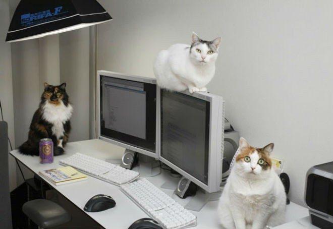 Empresa decide adoptar nueve gatos y los resultados han sido increíbles