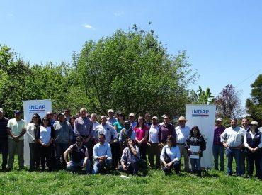 Expertos muestran el éxito del proyecto Predio Foco Ovino que se ejecuta en la Región de Los Ríos