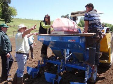 Ministerio de Agricultura instala semilleros grupales de papas en Región de los Ríos