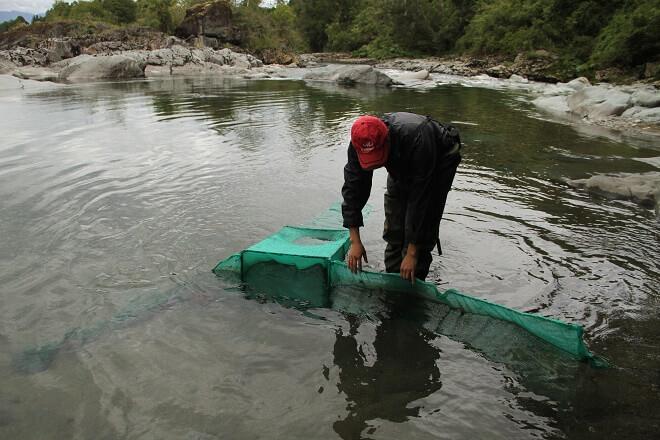 Inician línea base de la vida acuática en ríos que desembocan en Lago Ranco