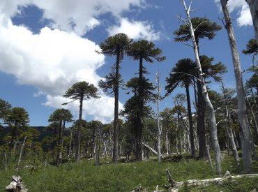 Sector turístico de la Araucanía apuesta por la sustentabilidad para la reactivación pospandemia
