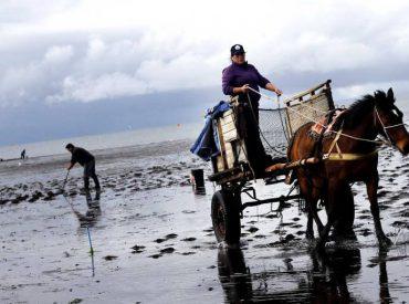 Fundación Cocinamar Invita a integrarse a Red de Emprendedores e Innovación de la Pesca Artesanal en Los Ríos