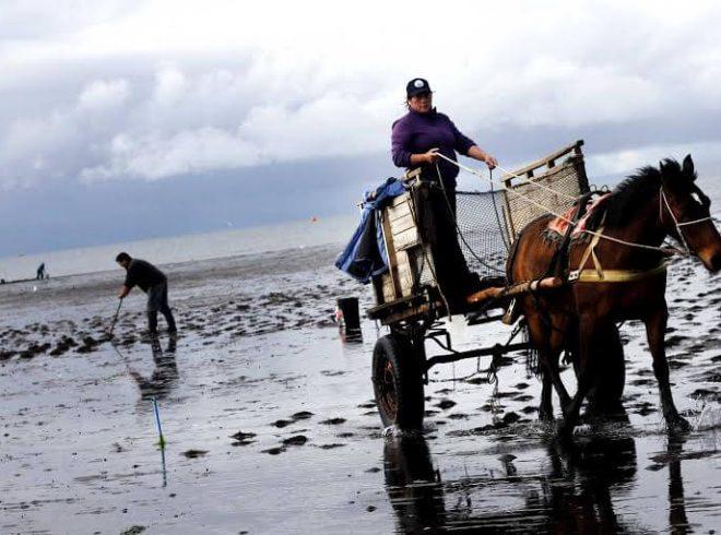 Pequeños productores de algas marcaron hoja de ruta para implementación de ley de bonificación de algas en los próximos años