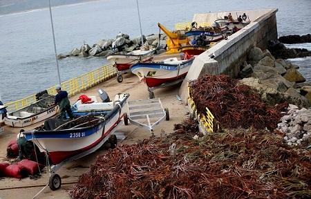 Un paso adelante para seguir potenciando el interés comercial y productivo del recurso algal en Chile
