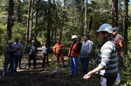 Consultores opinaron en relación a los valores del concurso de bosque nativo de CONAF