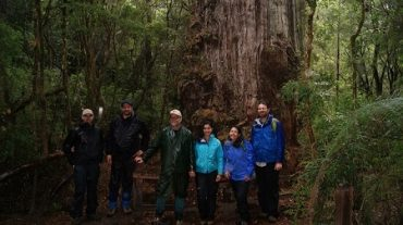 Investigación comparará alerces milenarios con el cedro rojo del Pacífico