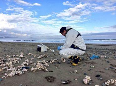 Bidema Valdivia toma muestras de recursos hidrobiológicos varados en Chiloé