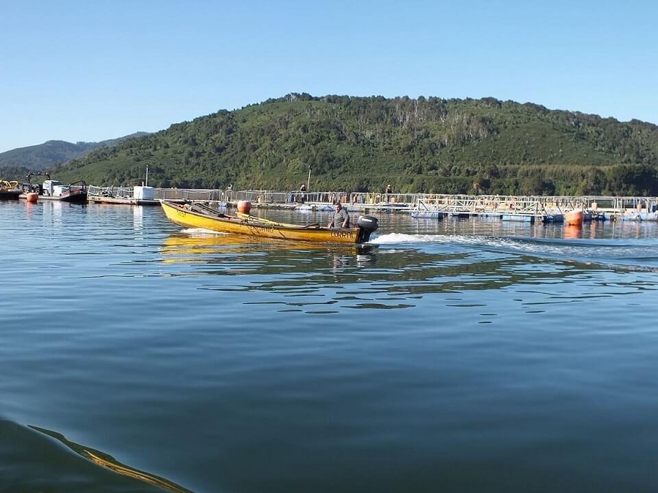Inician consulta a organizaciones de la pesca artesanal del sur de Chile a fin de permitir el ingreso de flota pesquera de reineta desde la V a la XII región