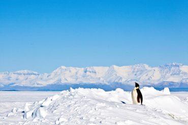 Invitan a profesores y estudiantes a hacer ciencia antártica