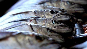 Merluza común, merluza del sur y el jurel registranpositivo aumento en cuotas de captura para 2017