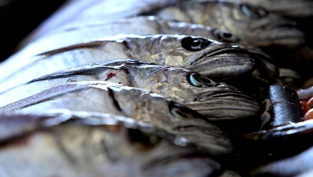Subsecretaría de Pesca definió en casi 20 mil toneladas captura anual de merluza del sur