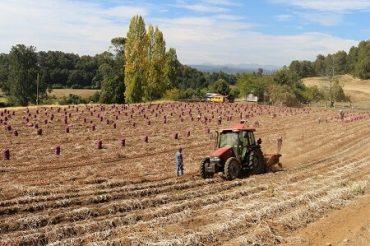 En Lago Ranco constituyen nueva Cooperativa de productores de papa