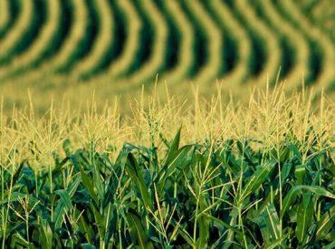 SAG Biobío recuerda a agricultores/as postular a concursos del Sistema de Incentivos para la Sustentabilidad Agroambiental de los Suelos Agropecuarios