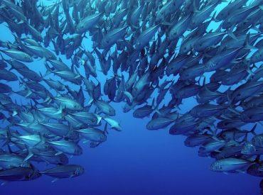 Sernapesca y ProChile invitan a conversatorio sobre tendencias en mercados internacionales para productos chilenos del mar