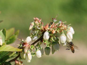 Organizaciones apícolas de Chile se movilizan en el Día Internacional de la Abeja