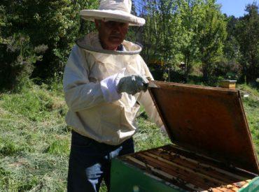 """""""Colmenares Pishuinco"""": la sagrada miel de la selva valdiviana"""