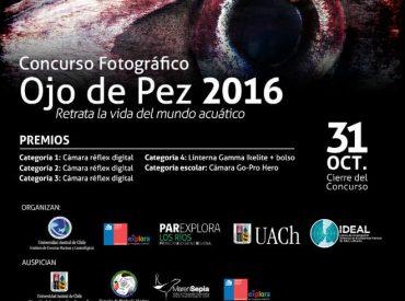 Para retratar la vida del mundo acuático en Chile: se abrió concurso fotográfico Ojo de Pez 2016