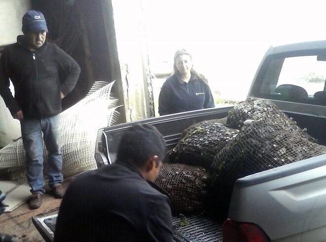 En Chiloé Sernapesca y Armada incautan choro zapato extraído de reserva marina en Putemún