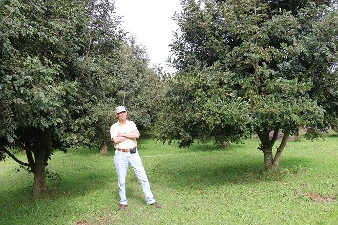 Gevuin: el fruto del Sur de Chile que busca conquistar el mundo