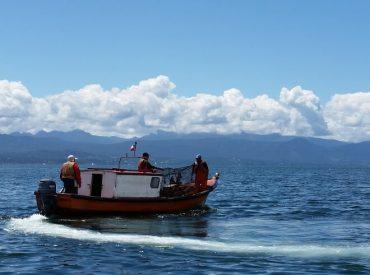 Comité de manejo critica la gestión a ciegas en la pesquería de congrio dorado