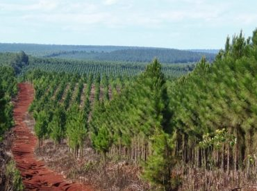 Diputada Joanna Pérez acusa integración vertical enindustria de la madera en el sur del país