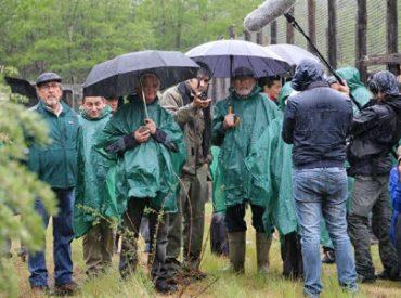 Trabajo público-privado permite la reintroducción del Huemul en la Región de Los Ríos