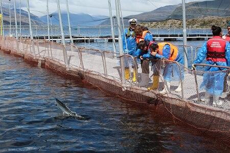 En Magallanes autoridades presentaron nueva regulación para manejo de mortalidades en centros de cultivo