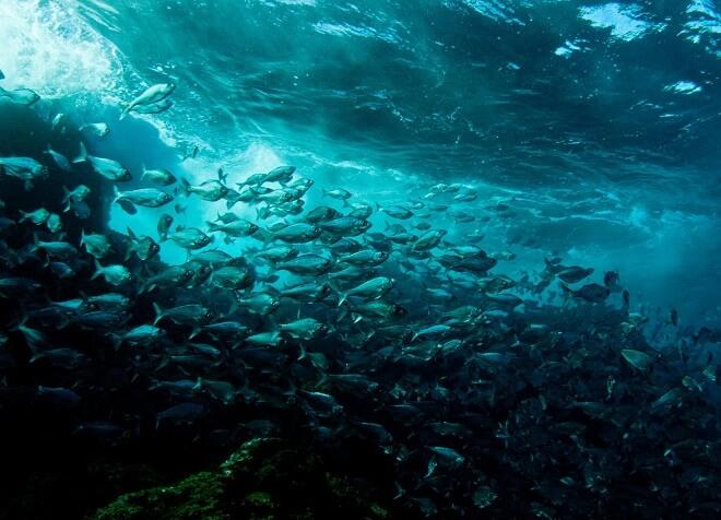 hakarori_mahore-cristian-rapu-ganador-fotografia-subacuatica