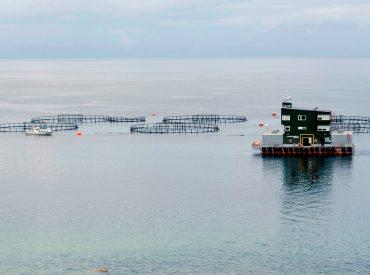Sernapesca deberá informar sobre situación sanitaria de salmones en regiones de Los Lagos, Los Ríos y Aysén