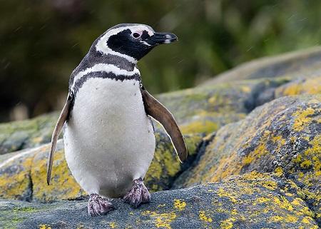 Sernapesca recuerda teléfonos de denuncia tras rescate de tortuga y pingüino en la Región de Los Lagos