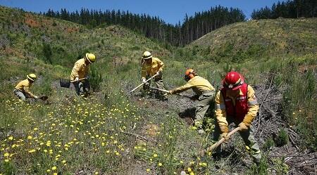 Incendios forestales: el apoyo público – privado para combatir la catástrofe medioambiental