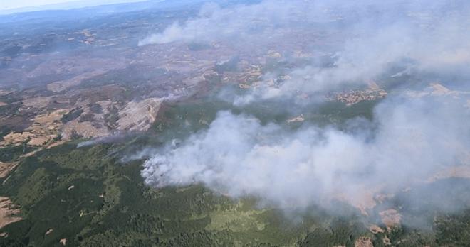 Corma estima pérdidas de 40 millones de dólares para el sector forestal por incendiosen regiones del Maule y Biobío