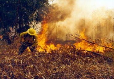 Eguiluz pide apoyar la creación de unidades deBomberos especializadas en incendios forestales