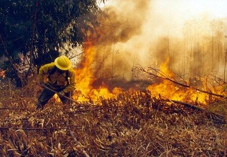 Intendente del Biobío declara alerta roja regional por incendios forestales
