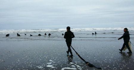 Pescadores de Cucao retoman extracción de machas tras autorización de Salud en Chiloé