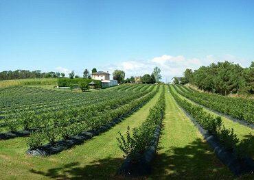 El cambio de la Ley de Registro de Contratos Agrícolas