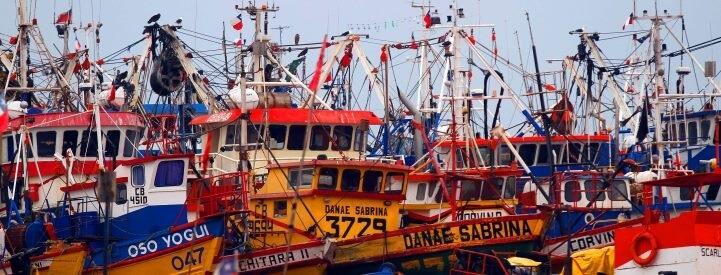 Nuevo reglamento a embarcaciones pone a Chile a la vanguardia internacional en la lucha contra el descarte en pesquerías