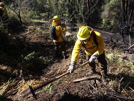 Cancelan alerta roja y declaran alerta amarilla comunal por incendios forestales en Región de Los Ríos