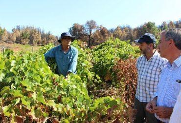 Experto en viticultura junto a Seremi del agro monitorean en terreno condiciones de viñedos del Bío Bío tras incendios forestales