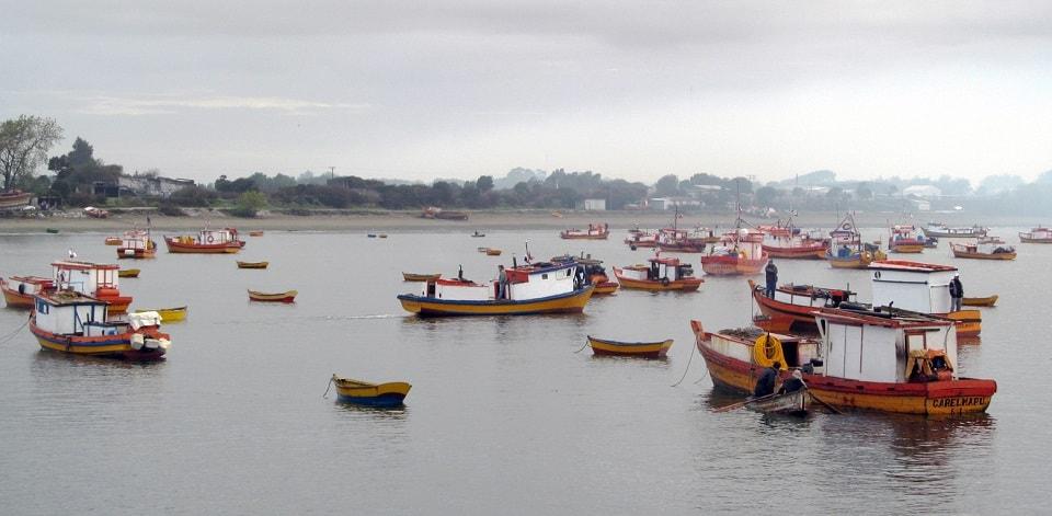 Sernapesca llama a comprar productos pesqueros en comercio establecido ante intoxicación por jurel