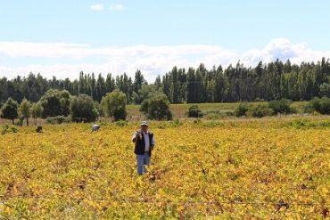 SAG fiscaliza funcionamiento de poderes compradores de uva en Bío Bío