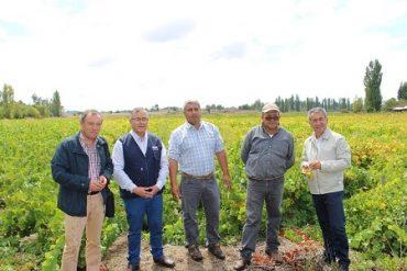 Autoridades visitan a viñateros de Quillón para dar inicio oficial de temporada vendimia 2017