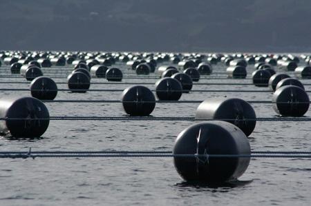 Subpesca invertirá $6.000 millones de pesosen programa de investigación pesquera y acuicultura