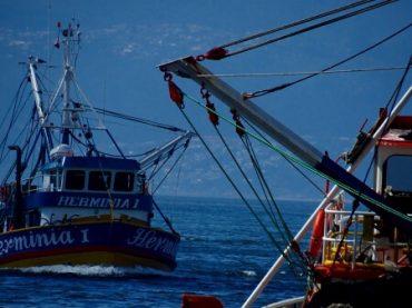 Parlamentarios discriminan a pescadores  industriales y les confunde con empresarios