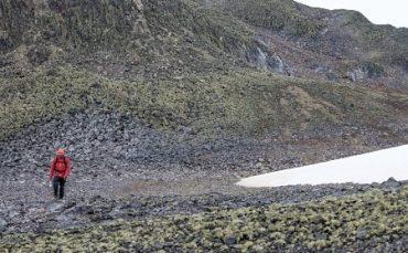 Bajo condiciones extremas investigan resistencia a salinidad en el clavelito antártico